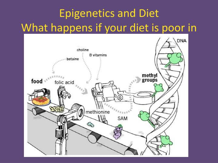 Epigenetics and Diet