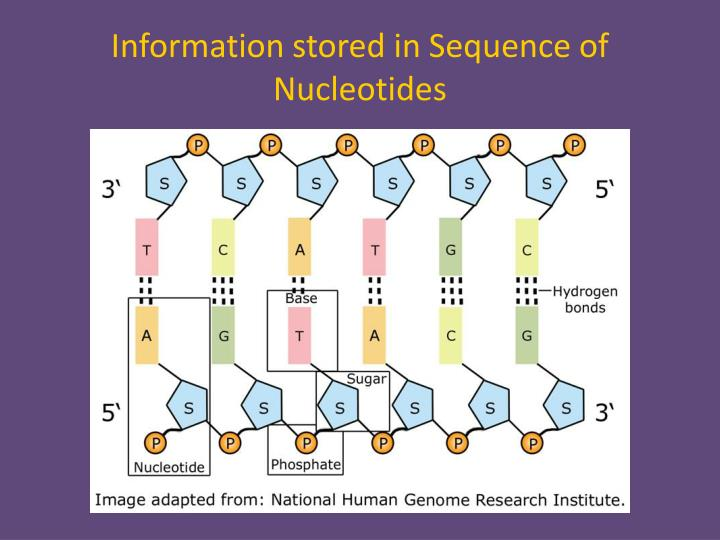Information stored in Sequence of Nucleotides