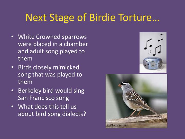 Next Stage of Birdie Torture…