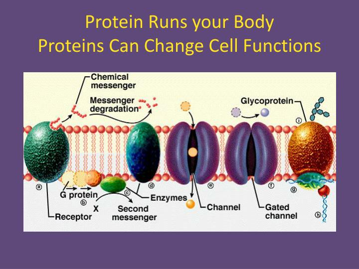 Protein Runs your Body