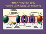 protein runs your body proteins can change cell functions