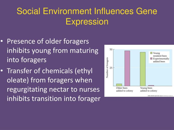 Social Environment Influences Gene Expression