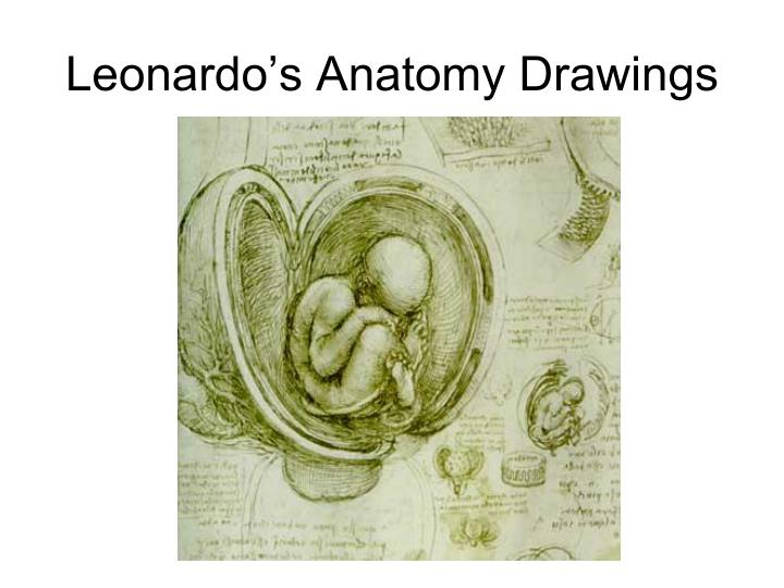 Leonardo's Anatomy Drawings