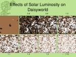 effects of solar luminosity on daisyworld
