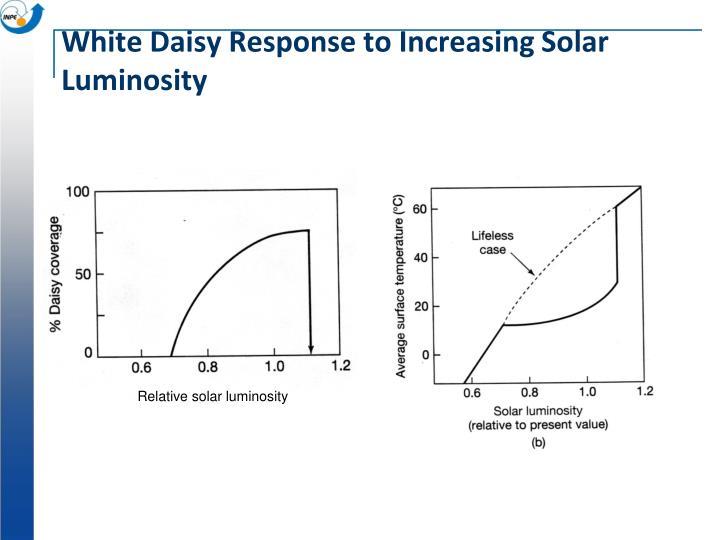 White Daisy Response to Increasing Solar Luminosity