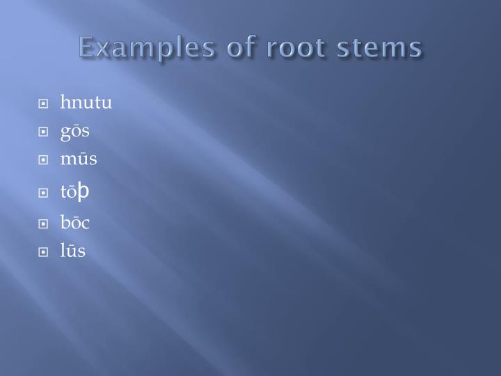 Examples of root stems