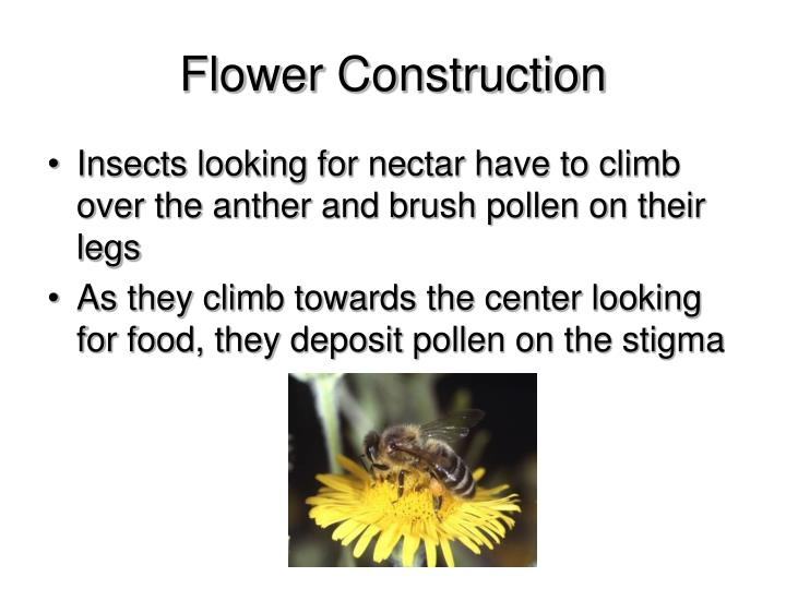 Flower Construction