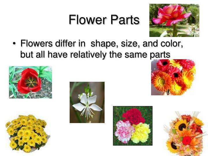 Flower Parts
