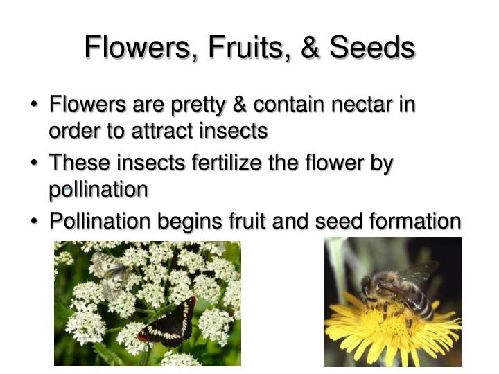 Flowers, Fruits, & Seeds