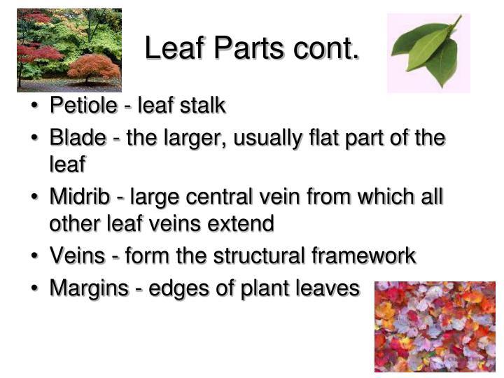 Leaf Parts cont.