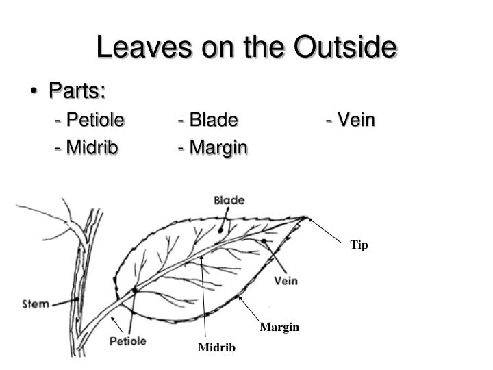 Leaves on the Outside