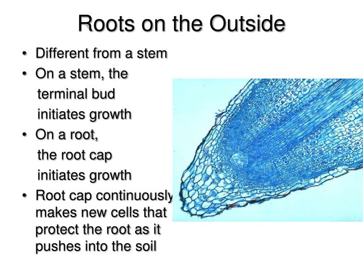 Roots on the Outside
