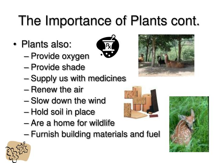 The importance of plants cont