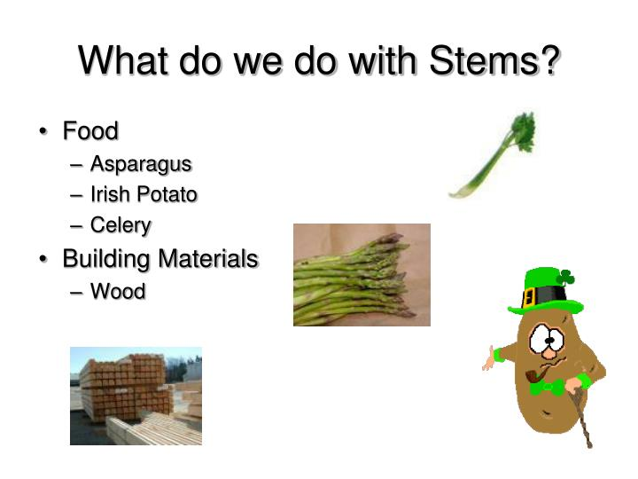 What do we do with Stems?