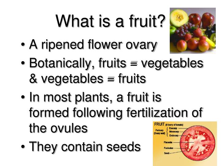 What is a fruit?
