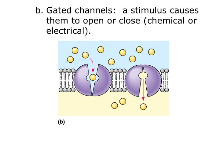 Gated channels:  a stimulus causes