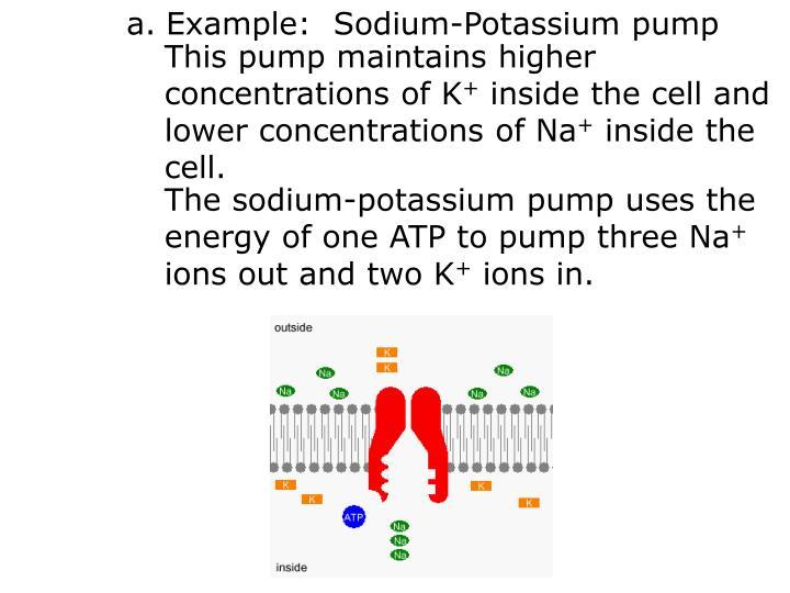 Example:  Sodium-Potassium pump