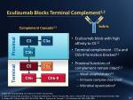 eculizumab blocks terminal complement 1 2