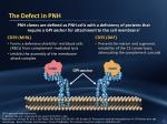 the defect in pnh