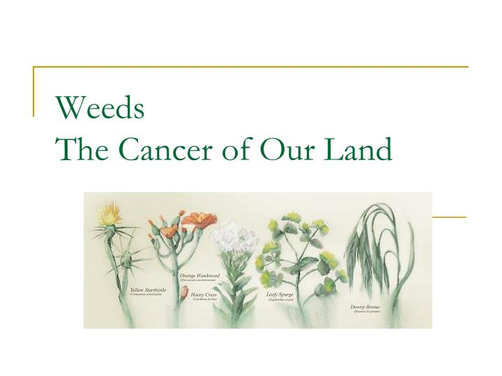 Weeds the cancer of our land
