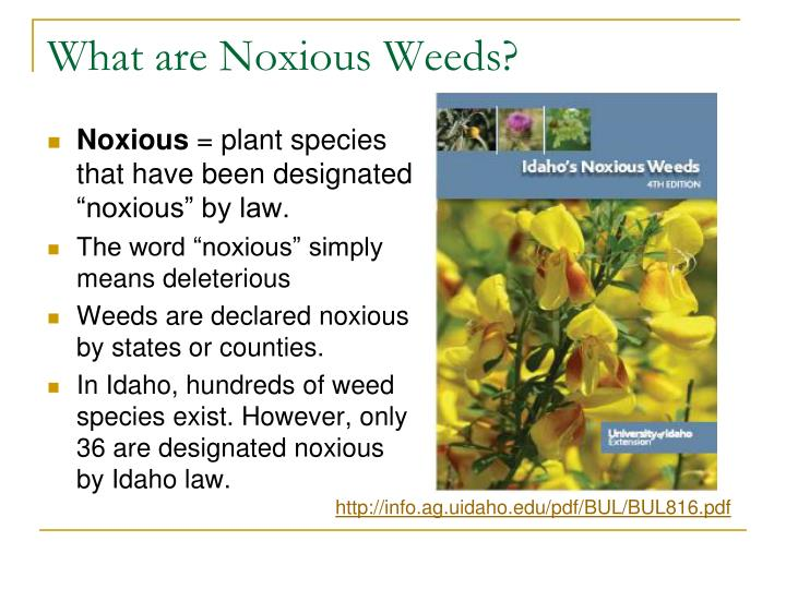 What are Noxious Weeds?