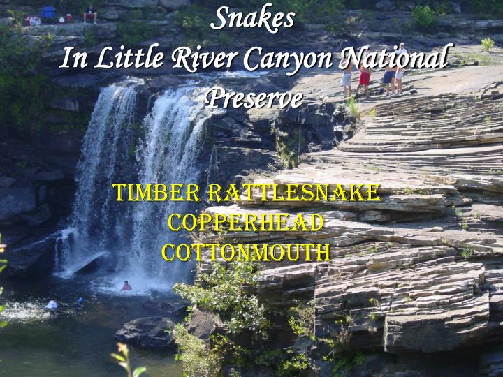 Snakes in little river canyon national preserve