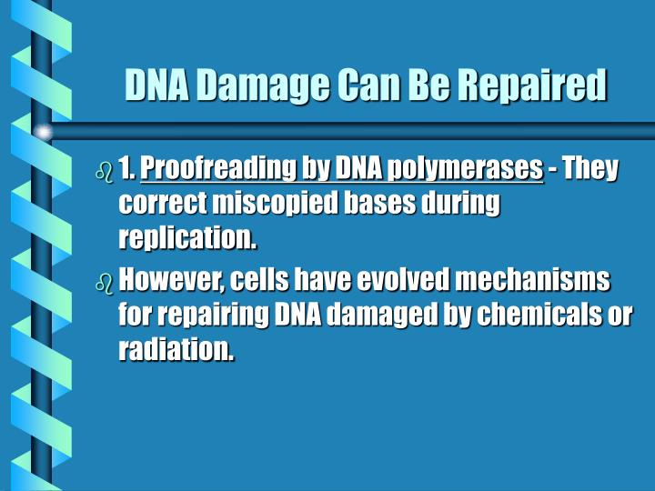 DNA Damage Can Be Repaired