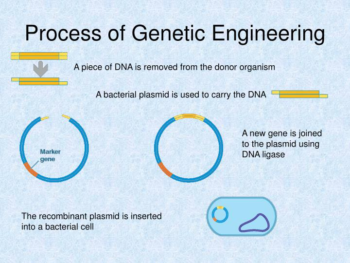 Process of Genetic Engineering