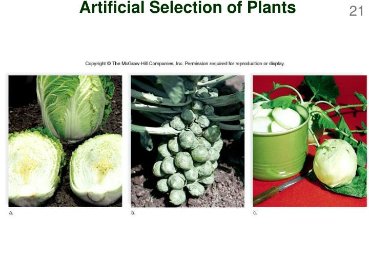 Artificial Selection of Plants