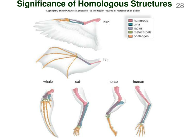 Significance of Homologous Structures