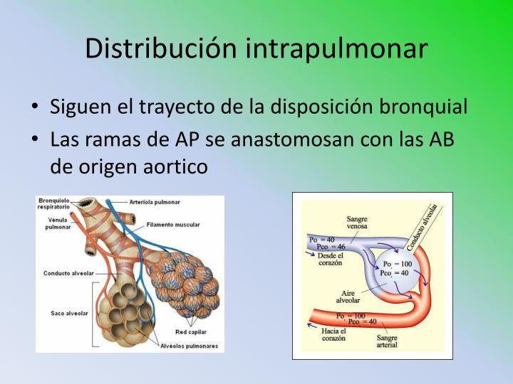 Distribución intrapulmonar