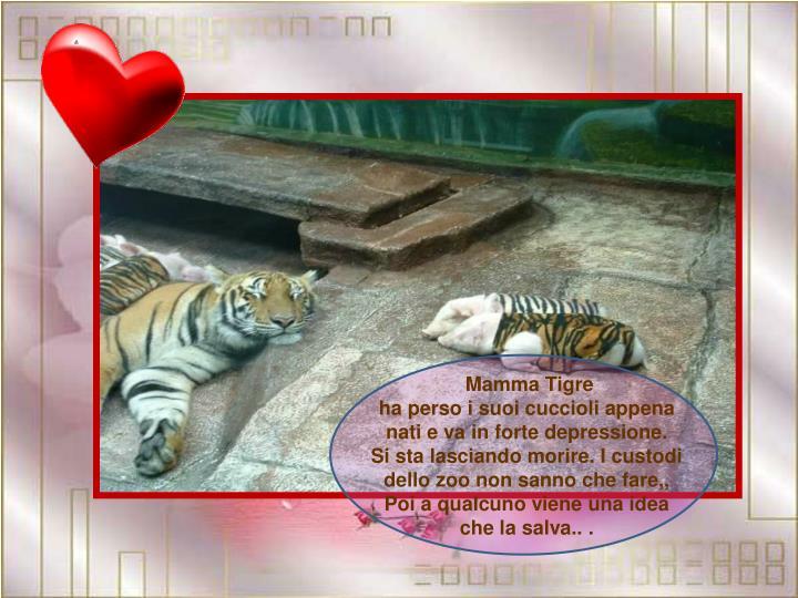 Mamma Tigre                                 ha perso i suoi cuccioli appena   nati e va in forte depressione.     Si sta lasciando morire. I custodi dello zoo non sanno che fare,,  Poi a qualcuno viene una idea  che la salva.. .