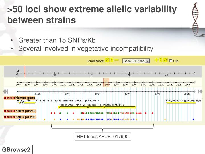 >50 loci show extreme allelic variability between strains
