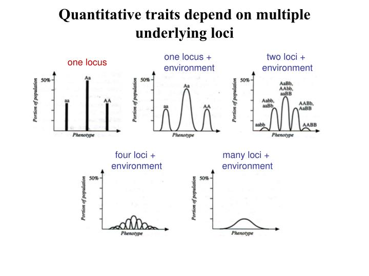 Quantitative traits depend on multiple underlying loci