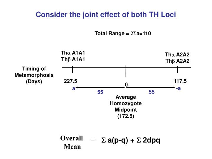 Consider the joint effect of both TH Loci