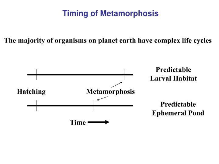 Timing of Metamorphosis
