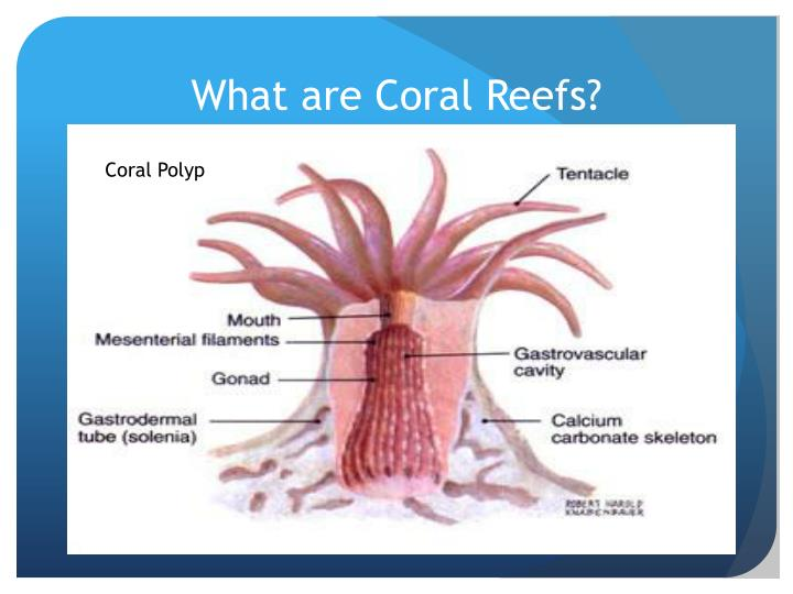 What are Coral Reefs?