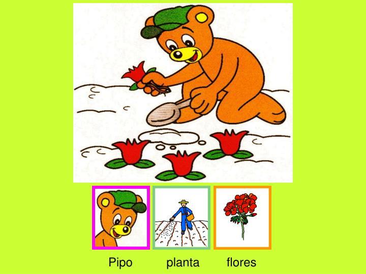 Pipo          planta        flores