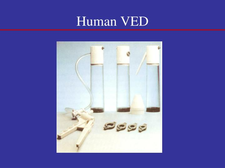 Human VED