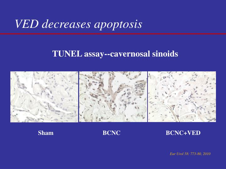 VED decreases apoptosis
