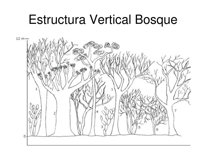 Estructura Vertical Bosque