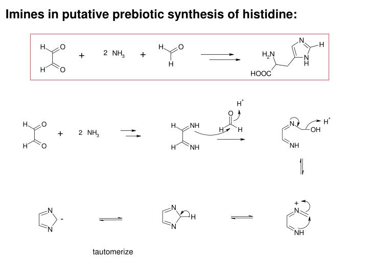 Imines in putative prebiotic synthesis of histidine: