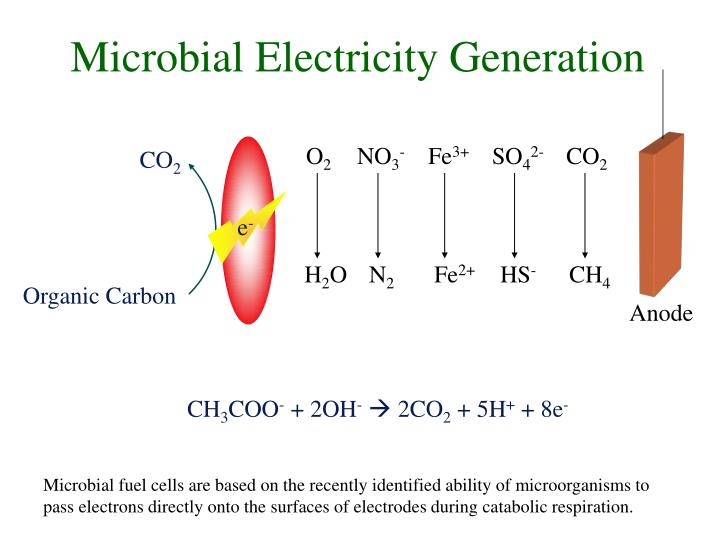 Microbial electricity generation
