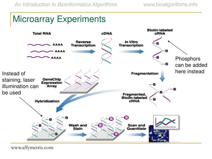 Microarray Experiments