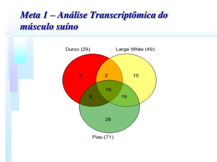 Meta 1  Anlise Transcriptmica do msculo suno