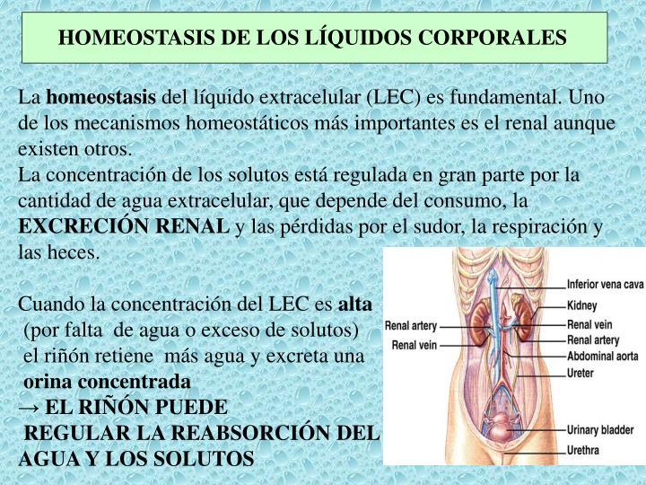 HOMEOSTASIS DE LOS LÍQUIDOS CORPORALES
