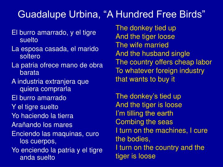 "Guadalupe Urbina, ""A Hundred Free Birds"""