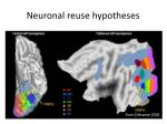 neuronal reuse hypotheses2
