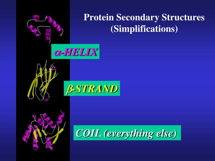 Protein Secondary Structures (Simplifications)