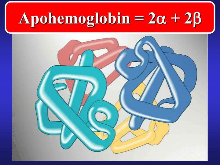 Apohemoglobin = 2